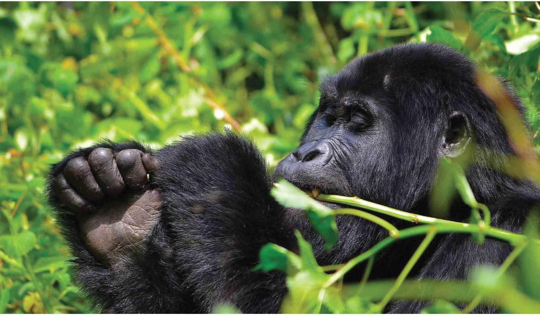 uganda-rwanda-primates
